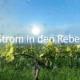 Strom und Wein: Unsere Kursteilnehmenden erhalten Badenova Projektförderung
